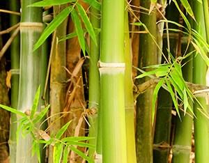 Natural Bamboo Charcoal Skin Care